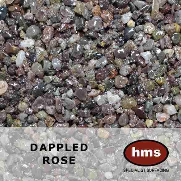 Dappled Rose
